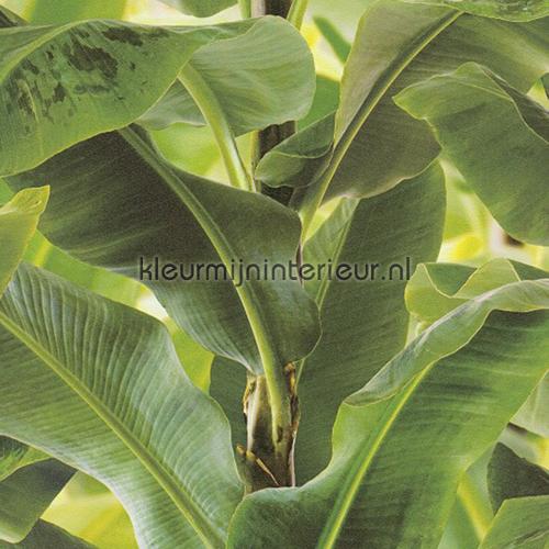 Bananenblad  Behang African Queen Ii Rasch Kleurmijninterieur Nl
