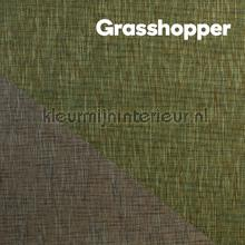 behaang Grasshopper