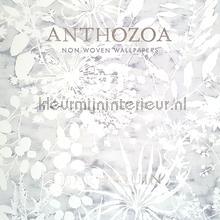 papel pintado Anthozoa