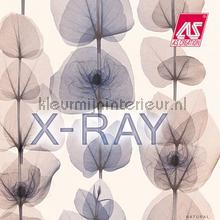 AS Creation - X-Ray - behang