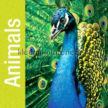 Animals fotobehang