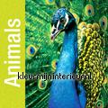 Animals fotomurales