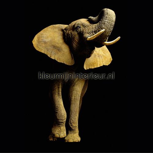 Elephant photomural 470033 AP Digital Architects Paper