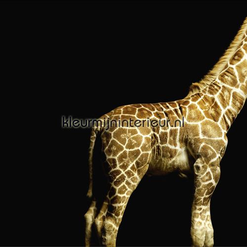 Giraffe fotobehang 470035 AP Digital Architects Paper