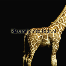 Giraffe fotomurales Architects Paper AP Digital 470035