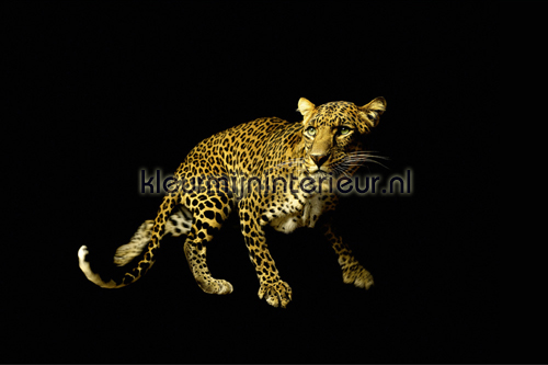 Leopard fotobehang 470036 AP Digital Architects Paper