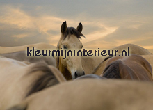 I love my Horse fotobehang BN Wallcoverings No Limits 30023