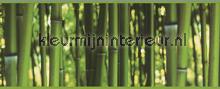 Bamboo rand tapet AS Creation Vintage Gamle
