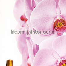 Orchidee fotomurales ML203 Wallpaper Queen Behang Expresse