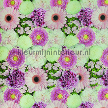 Gerbera`s fotobehang Behang Expresse Wallpaper Queen ML206