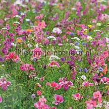 Flowers in the field fotobehang Behang Expresse Wallpaper Queen ML234