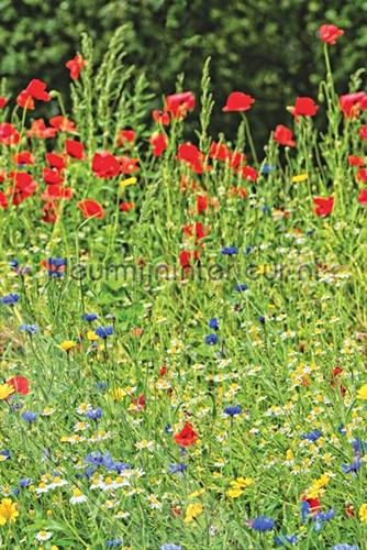 Wilde bloemen in het veld fotomurales ML235 Wallpaper Queen Behang Expresse