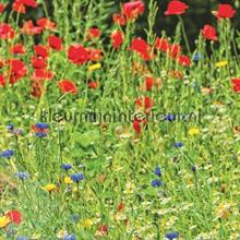 Wilde bloemen in het veld fotomurais Behang Expresse Wallpaper Queen ML235