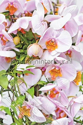 Orchideeen fotomurales ML236 Wallpaper Queen Behang Expresse