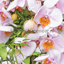 Orchideeen fotobehang Behang Expresse Wallpaper Queen ML236