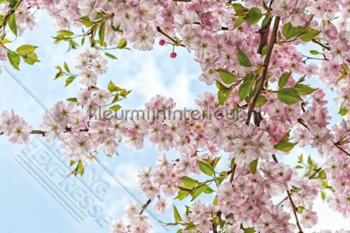 In volle bloei fotomurales ML240 Wallpaper Queen Behang Expresse