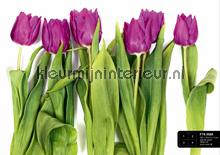 Paarse tulpen fotomurales AG Design AG Design FTS-0065