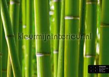 Bamboo fotomurales AG Design AG Design FTS-0170