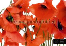 Oranje klaprozen fotomurales AG Design AG Design FTS-0479
