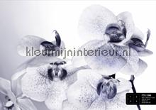 Orchidee in zwart-wit fotomurales AG Design AG Design FTS-1306