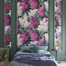 Lilac Grandiflora tapet Cole and Son interiors
