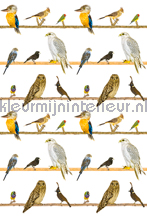 Vogels op takken fotomurales Curious Collections Curious Collections CC MLE 10187