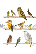 Vogels op tak fotobehang Curious Collections Curious Collections CC MLE 10187 FW