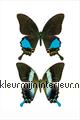 Vlinders Marielle Leenders