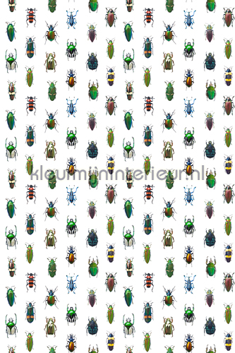 Insecten fotomurales CC_MLE_10219 Curious Collections