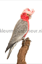 Vogel - rood/grijs fotobehang Curious Collections Curious Collections CC MLE 10240 FW