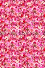 Bloemen - roze fotomurales Curious Collections Curious Collections CC MLE 10241
