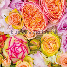 Bloemen - roze/oranje fotomurales CC_MLE_10093 Curious Collections
