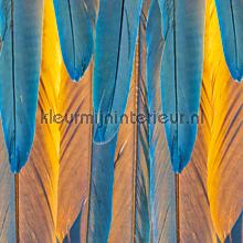 Veren - blauw/oranje fotomurales CC_MLE_10083 Curious Collections