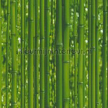 Bamboo stengels tapeten AS Creation Dekora Natur 6 95936-1