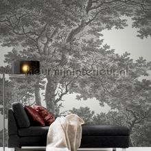 Close up boom zwart wit wallcovering Rasch all-images