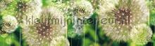 Dandelions rand behang Kleurmijninterieur randen