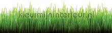 Grass rand behang Kleurmijninterieur randen