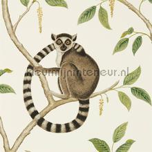 Ringtailed lemur behaang Sanderson Engelse blukskes