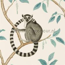 Ringtailed lemur tapet Sanderson Cottage