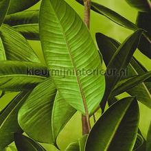 Groene planten tapeten AS Creation weltraum