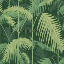 Palm Jungle papel de parede Cole and Son Icons 112-1003