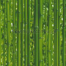Bamboo tapet AS Creation Il Decoro 95936-1