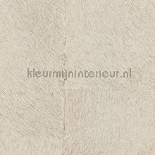 Appaloosa hpc papier peint Elitis Indomptee Appaloosa HPC CV-113-04