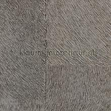 Appaloosa hpc papier peint Elitis Indomptee Appaloosa HPC CV-113-05