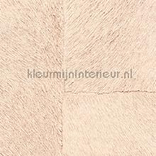 Appaloosa hpc papier peint Elitis Indomptee Appaloosa HPC CV-113-07