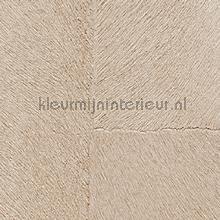 Appaloosa hpc papier peint Elitis Indomptee Appaloosa HPC CV-113-08