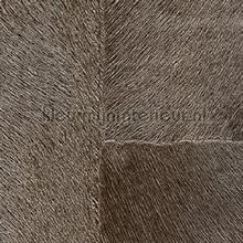 Appaloosa hpc papier peint Elitis Indomptee Appaloosa HPC CV-113-14