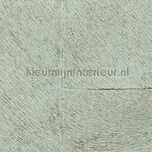 Appaloosa hpc papier peint Elitis Indomptee Appaloosa HPC CV-113-16