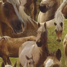 Echte paarden behang Rasch Kids and Teens II 293104