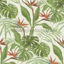 Exotische paradijsvogelbloem papel de parede Rasch Mandalay 529029